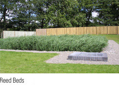 Link to Reed Bed Page